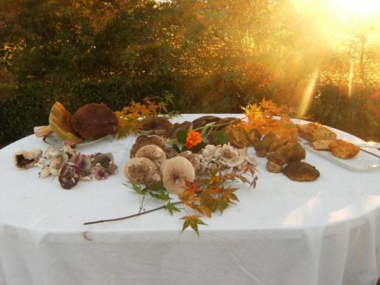 9 novembre 2011, les derniers champignons d'Hélène LEROY-PEETERS.