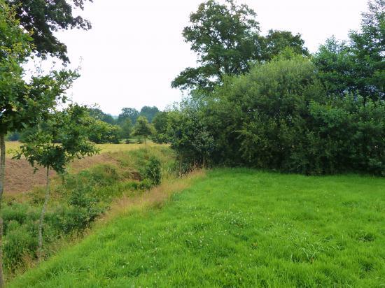 27 juillet 2012, la barrière de la végétation, vue vers l'Est.
