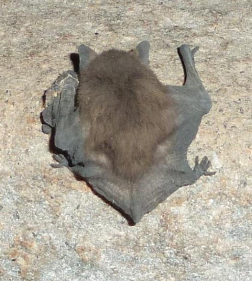 24 juillet 2012, l'autre espèce à identifier.