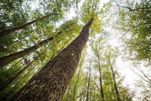 Enoptea La transition énergétique est en marche selon WWF !