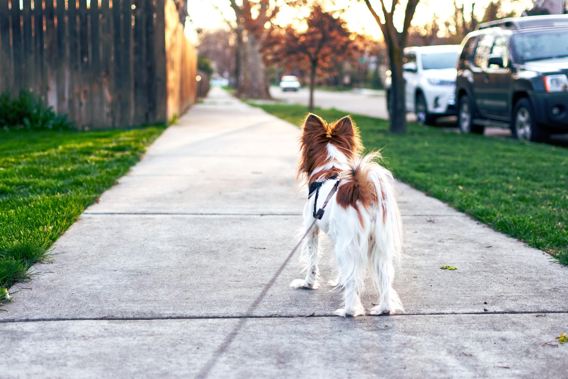Comment_démarrer_une_entreprise_de_promenade_de_chiens