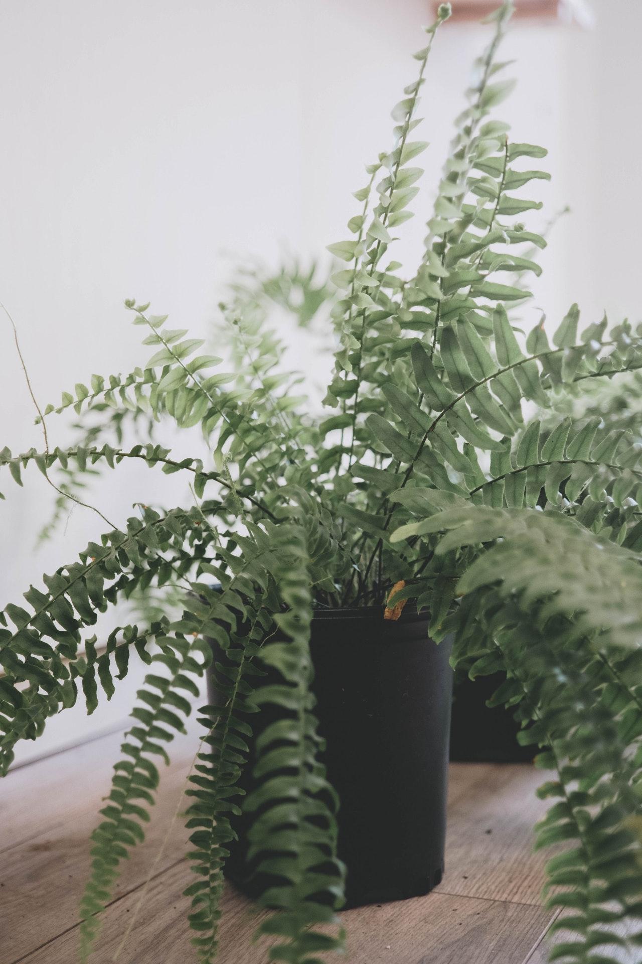 Les_8_meilleures_plantes_d_intérieur_pour_votre_maison_et_vos_animaux_de_compagnie