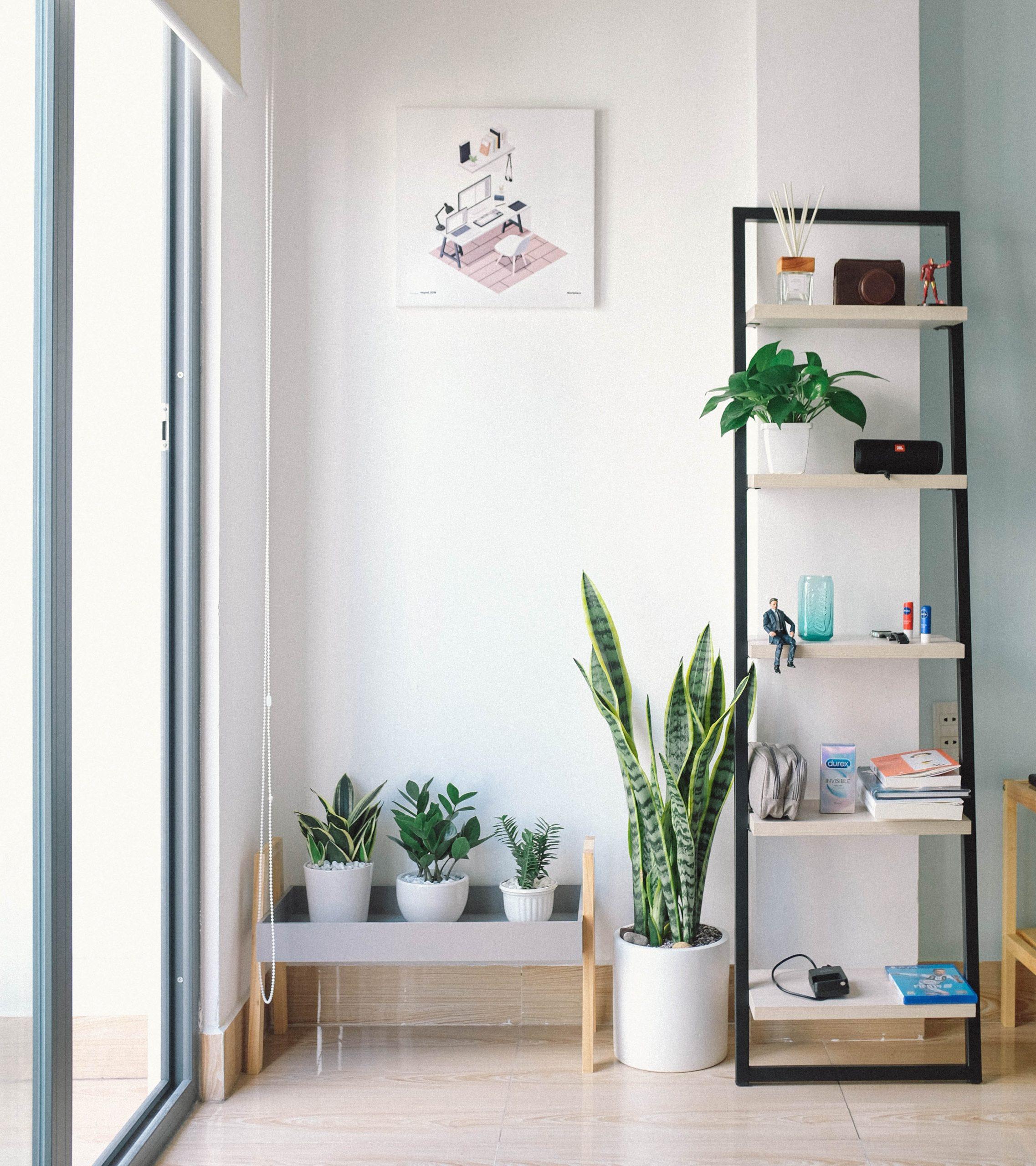 L_importance_d_avoir_des_plantes_dans_chaque_pièce_de_la_maison