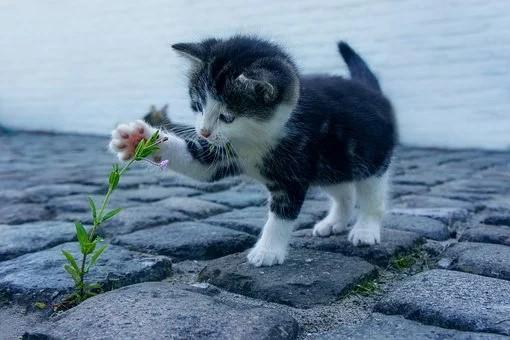 chat jouant une fleur