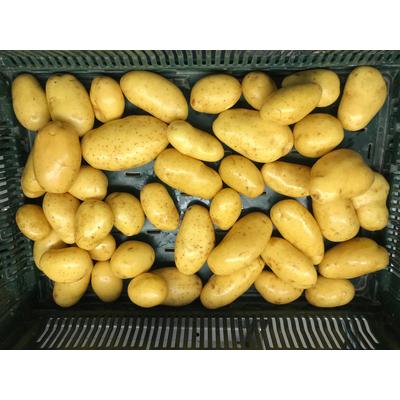 Potatoes - Label HVE certification
