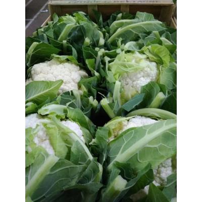 Cauliflower caliber 6