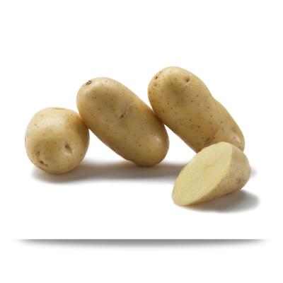 Laurette Potato by Bayard