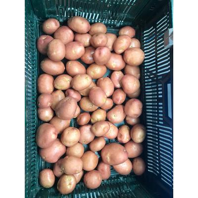 Potatoes Red tender flesh