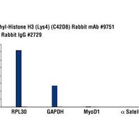 Tri-Methyl-Histone H3 (Lys4) (C42D8) Rabbit mAb