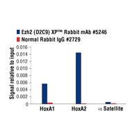 Ezh2 (D2C9) XP® Rabbit mAb