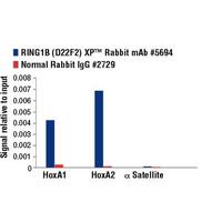 RING1B (D22F2) XP® Rabbit mAb