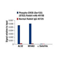 Phospho-CREB (Ser133) (87G3) Rabbit mAb
