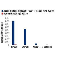 Acetyl-Histone H3 (Lys9) (C5B11) Rabbit mAb