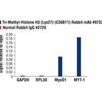 Tri-Methyl-Histone H3 (Lys27) (C36B11) Rabbit mAb