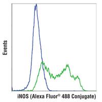 iNOS (D6B6S) Rabbit mAb (Alexa Fluor® 488 Conjugate)