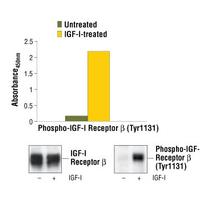 PathScan® Phospho-IGF-I Receptor beta (Tyr1131) Sandwich ELISA Kit