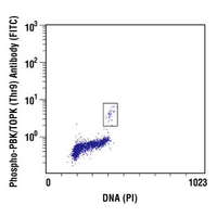 Phospho-PBK/TOPK (Thr9) Antibody