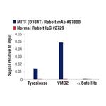 MITF (D3B4T) Rabbit mAb
