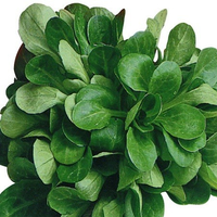 Salade mäche beausse, colis de 1 kg