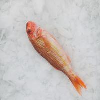 Filet Rouget Barbet Du Vietnam 40/80800G