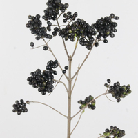 Liguster Berries noir 50cm, carton de 50 bottes