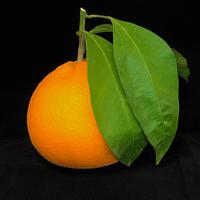 Orange  Tarocco 20kg