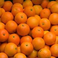 CLEMENTINE Feuille Oronules