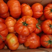 Tomate Rebellion plateau 6kg