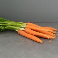 Carotte - Orange - Botte - FRA - Rais