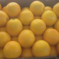 Orange Midknight Sitrusrand 7/88 Cat I