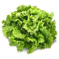 Salade Batavia Piece FRANCE   cat.1