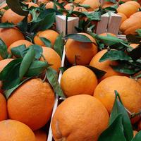 Orange Bio, Colis De 9,5Kg