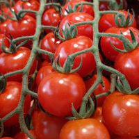TOMATE SWEETBABY Jouno Extra, colis de 3kg