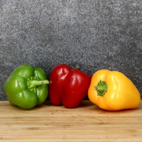 Poivron vert bio catégorie 2, calibre 70/90, colis de 5 kg