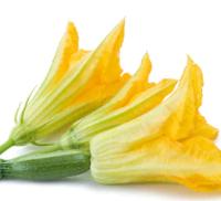 Courgette Fleur Femelle , Colis De 10 Barquettes
