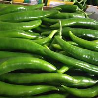 Poivron Corne Vert, Colis De 5Kg