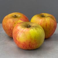 Pomme - Reine Des Reinettes - CAL:150- FRA - Rais