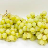 Raisin Blanc Italia Brio