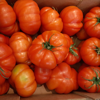 Tomate Rebellion plateau Naturinda 4kg