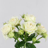 Rose br Bridal Flow 50cm, carton de 5 bottes