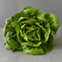 Salade - Sucrine - Verte - FRA - Rais