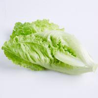 Salade sucrine lucas, colis de 6 pièces