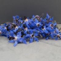 Fleur de Bourrache - 30 unités - FRA - Rais