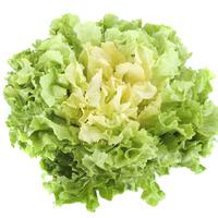 Salade scarole XL catégorie 1, colis de 8 pièces