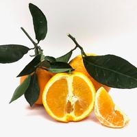 Orange Newhall Feuille Santi