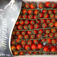Tomate  Cerise Imperial