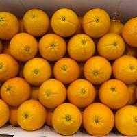 Orange Unifrutti Navel Late 3/55 Cat I