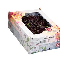 Sakura Cress Hollande, Colis De 16 Barquettes