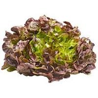 Salade Feuille De Chene Piece FRANCE   cat.1