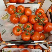 Tomate ronde grappe catégorie 1, colis de 5 kg